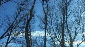 Baumfällung mit Kran und Arbeitskorb